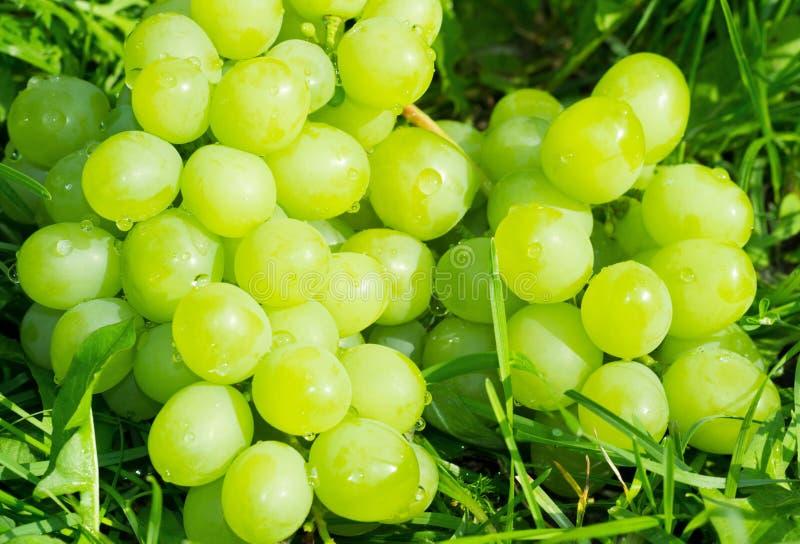 Manojo de uvas verdes fotografía de archivo