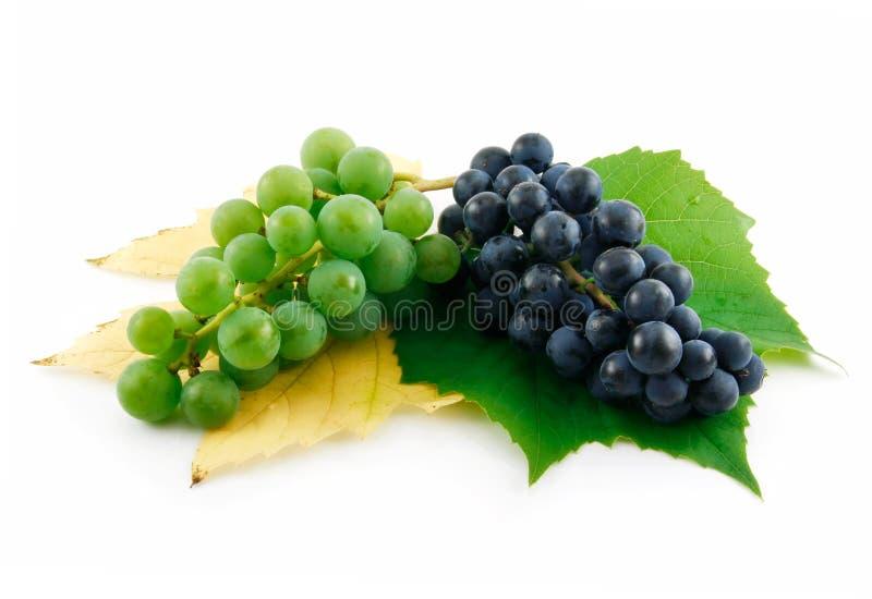 Manojo de uvas verdes y azules maduras con la hoja fotografía de archivo libre de regalías