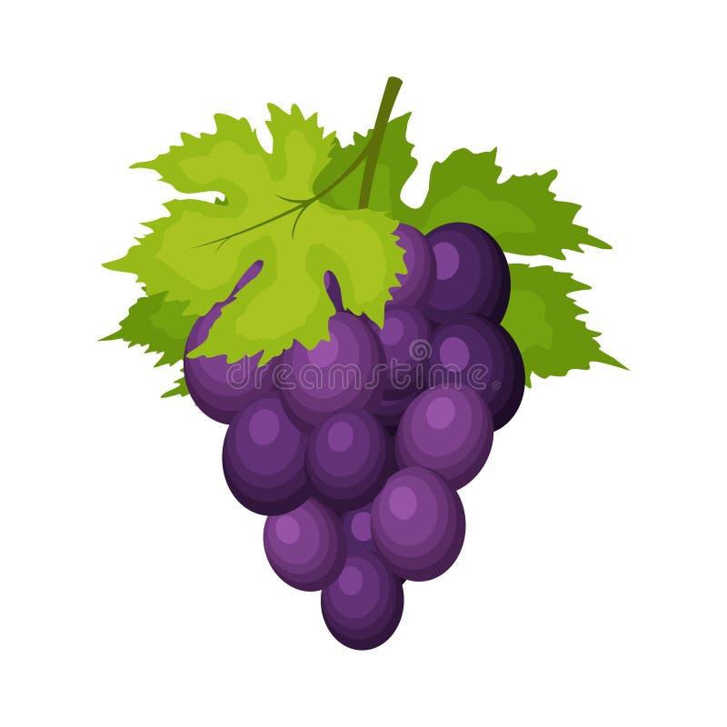 Manojo de uvas de vino con las hojas aisladas en el backgrond blanco Icono de la uva en estilo plano de la historieta Baya fresca ilustración del vector