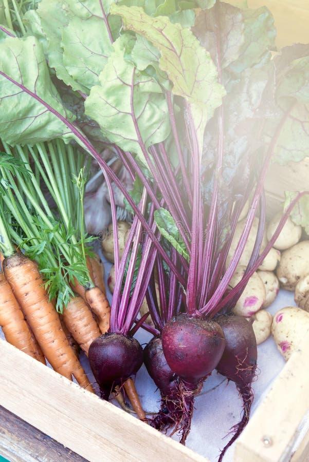 Manojo de zanahorias y de patatas orgánicas maduras frescas de las remolachas en Tray Fresh Vegetable rústico de madera fotografía de archivo