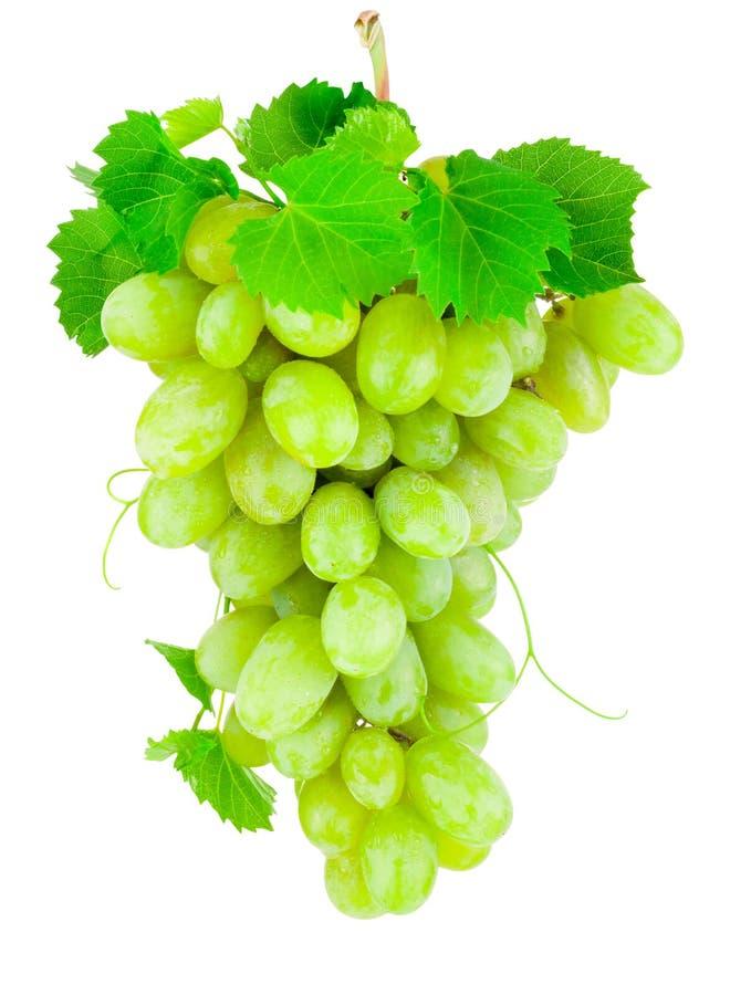 Manojo fresco de uvas verdes aisladas en el fondo blanco fotografía de archivo libre de regalías