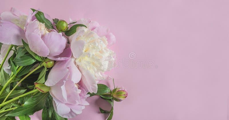 Manojo hermoso de peonías rosadas en fondo rosado imágenes de archivo libres de regalías
