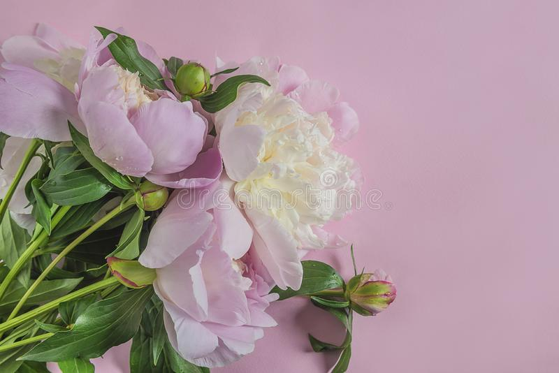 Manojo hermoso de peonías rosadas fotografía de archivo