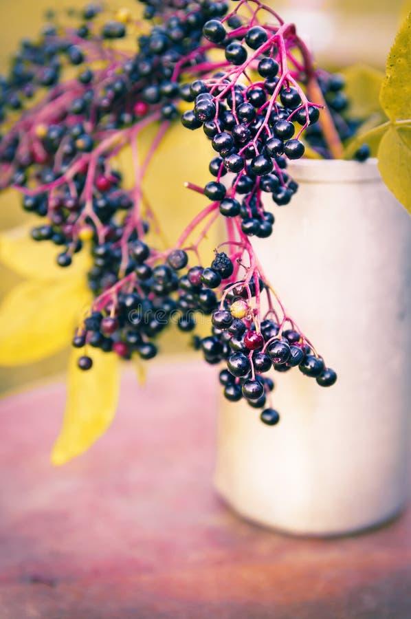 Manojo maduro de las bayas del saúco en la tabla en jardín del otoño imagen de archivo