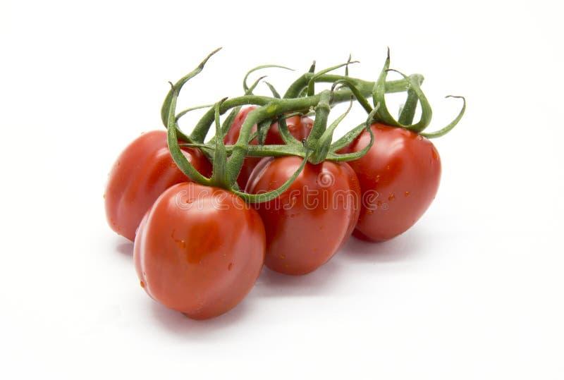 Manojo piccadilly de tomate fotos de archivo
