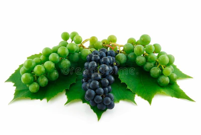 Manojos de uvas verdes y azules maduras aisladas fotos de archivo libres de regalías