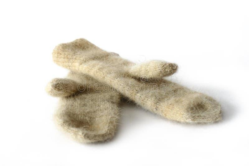 Manoplas de las lanas del perro foto de archivo libre de regalías