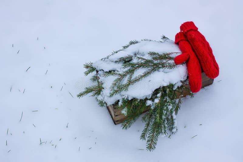 Manoplas rojas y ramas de árbol verdes de abeto en caja decorativa de madera en nieve fotografía de archivo
