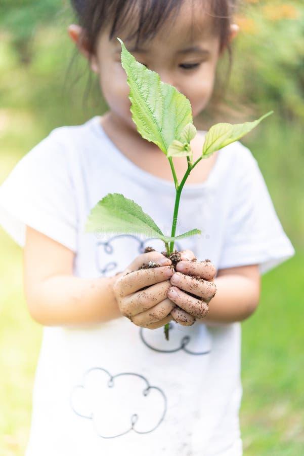 Manos asiáticas de la muchacha que sostienen la pequeña planta para prepararse para la plantación imagenes de archivo