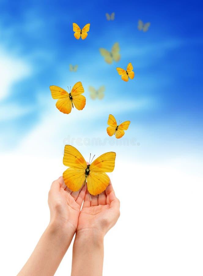 Manos con las mariposas foto de archivo