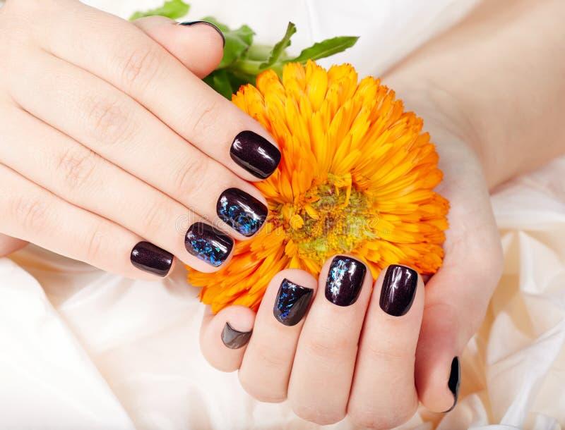 Manos con los clavos manicured cortocircuito coloreados con el esmalte de uñas púrpura oscuro que sostiene una flor fotos de archivo