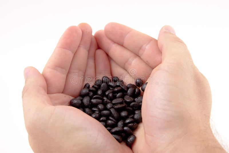 Manos con los granos de café fotografía de archivo libre de regalías