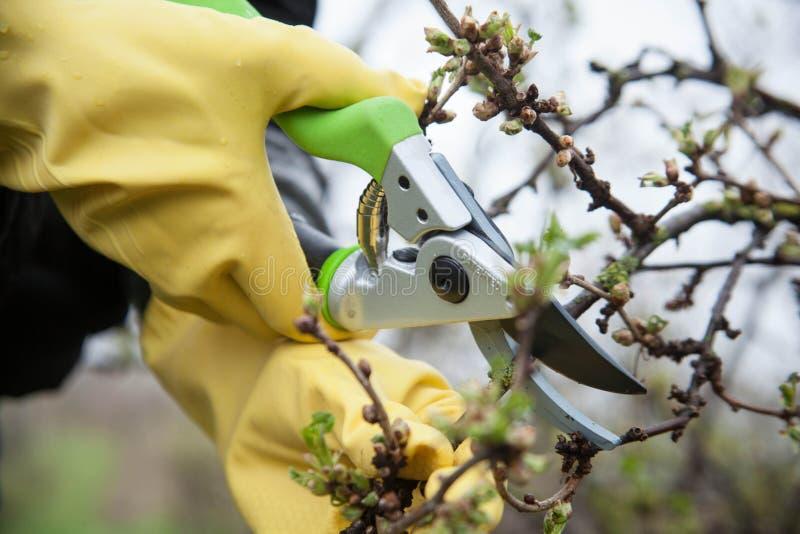 Manos con los guantes del jardinero que hacen el trabajo de mantenimiento imágenes de archivo libres de regalías