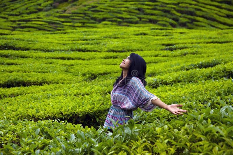 Manos de extensión con alegría en la plantación de té, montañas de Cameron, Malasia de la mujer feliz joven imágenes de archivo libres de regalías