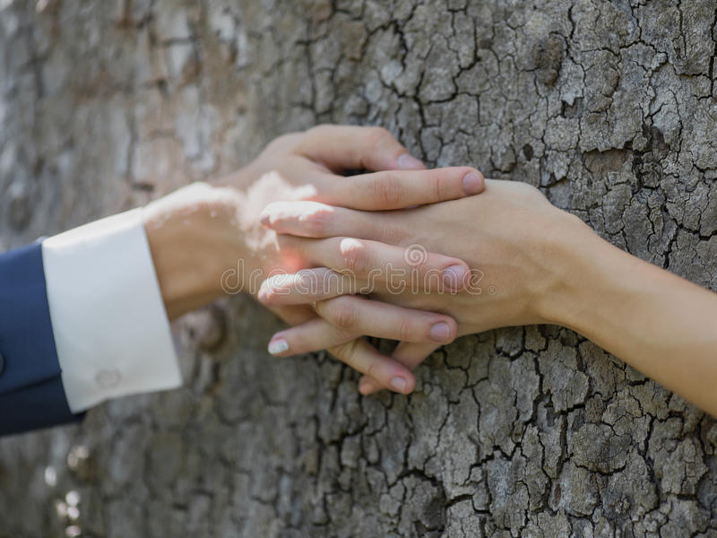 Manos de la boda en la corteza del árbol imagen de archivo libre de regalías