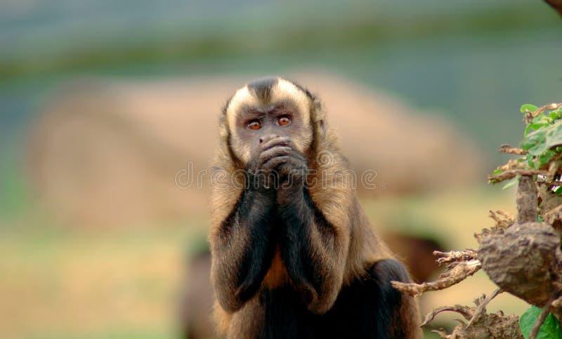 Manos de la explotación agrícola del mono imágenes de archivo libres de regalías