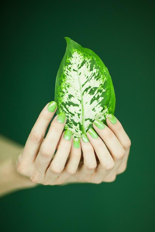 Manos De La Mujer Con El Esmalte De Uñas Verde Que Sostiene Algunas ...