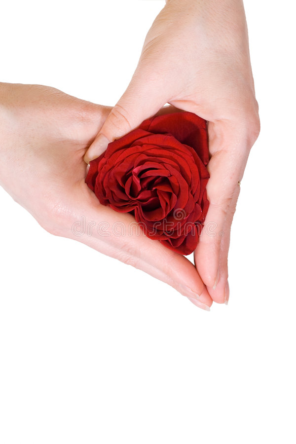 Manos de la mujer que forman un corazón de la rosa imagen de archivo libre de regalías