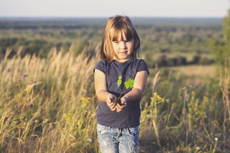 Manos de las niñas que sostienen un pequeño árbol de arce fotos de archivo