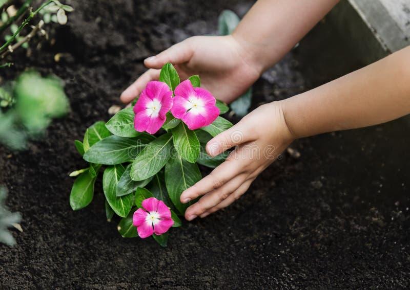 Manos de los niños alrededor de la planta joven verde de la flor fotografía de archivo