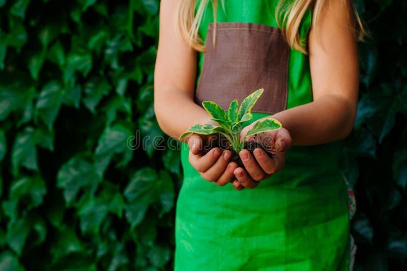Manos de los niños que sostienen el brote en un suelo foto de archivo libre de regalías