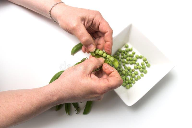 Manos de mujer pelando arvejas orgánicas frescas sobre fondo de mesa blanca fotos de archivo libres de regalías