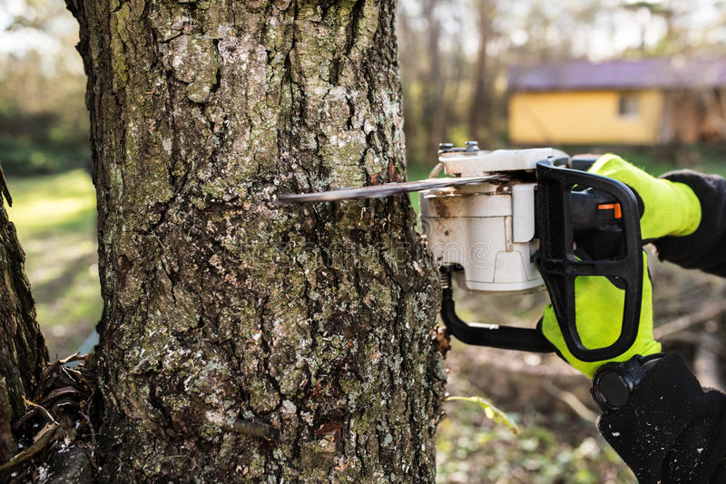 Manos del leñador irreconocible con la motosierra que corta un árbol foto de archivo