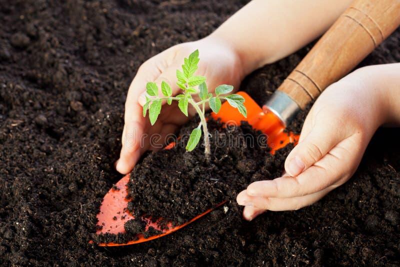 Manos del niño que protegen la planta de semillero foto de archivo
