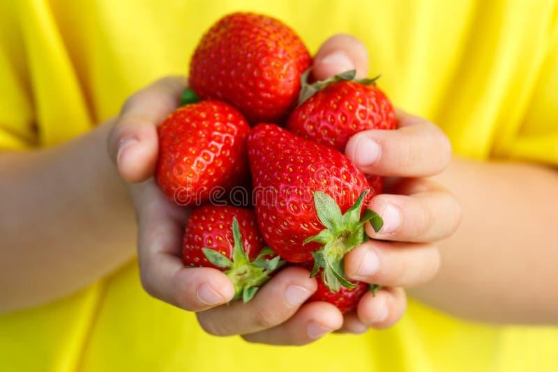 Manos del verano de la baya de la fresa de las bayas de las fresas fotos de archivo