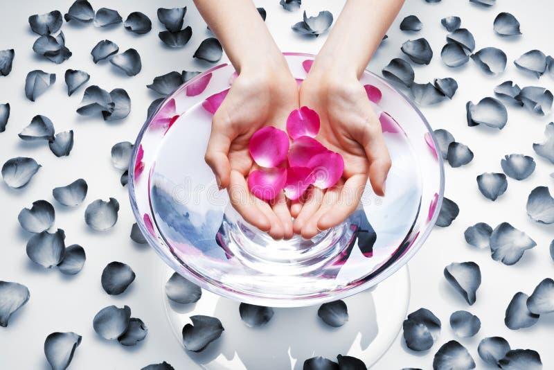 Download Manos En El Tratamiento Del Balneario Imagen de archivo - Imagen de asimiento, flor: 41919423
