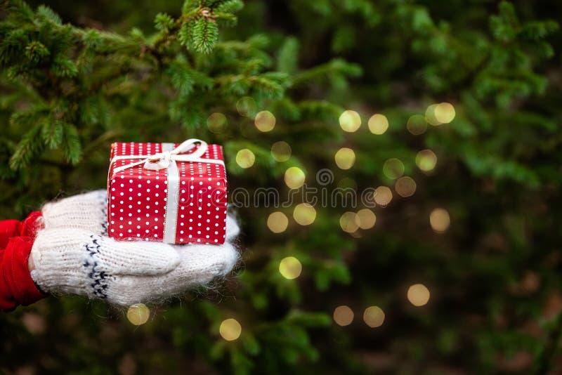 Manos en mitones de punto sosteniendo una caja de regalo de Navidad. Fondo del árbol del filo imagen de archivo