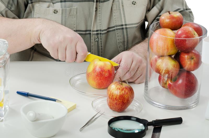 Manos expertas de Phytocontrol cuting la manzana fotografía de archivo