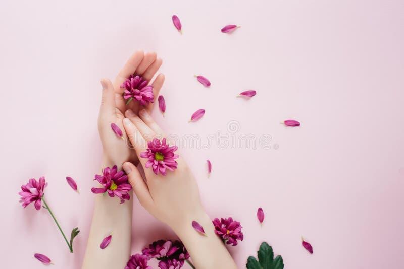 Manos femeninas hermosas del primer con las flores del purpure en fondo rosado Cosm?ticos para la arruga anti de las manos fotografía de archivo