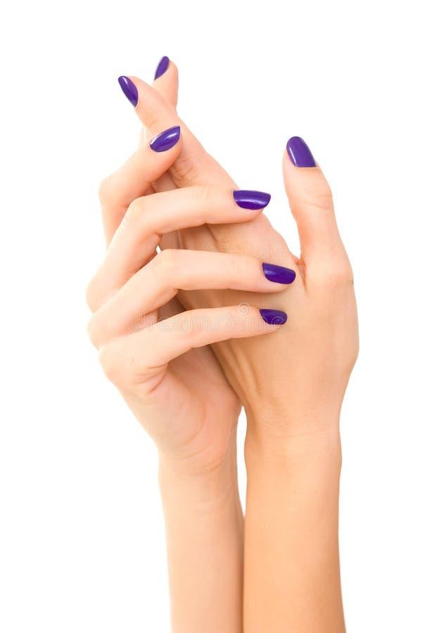 Manos hermosas de la mujer con la manicura púrpura Cuidado de la mano CCB blanco imagen de archivo