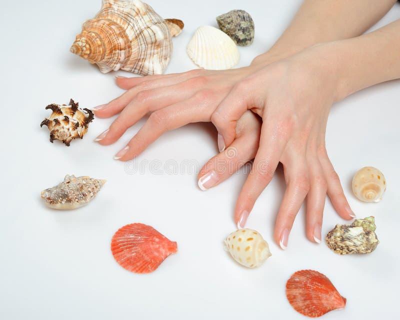 Manos hermosas, manicura francesa del balneario, shelles del mar fotos de archivo libres de regalías