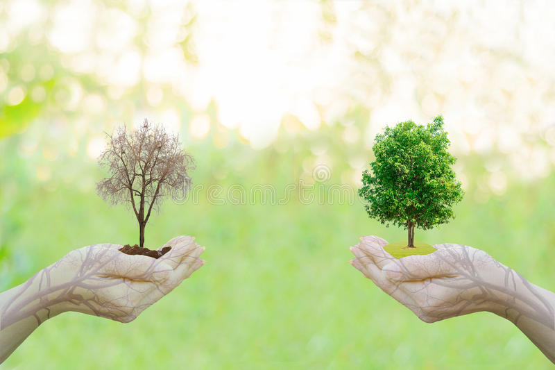 Manos humanas de la idea del concepto de la ecología de la exposición doble que sostienen la ciudad grande del árbol de la planta fotos de archivo libres de regalías