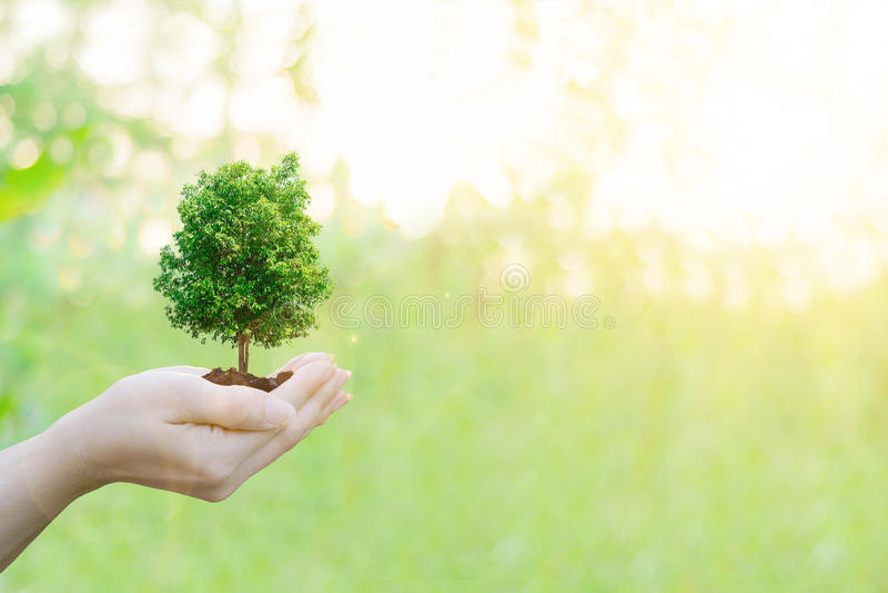 Manos humanas del concepto de la ecología de la exposición doble que sostienen el árbol grande de la planta imagen de archivo