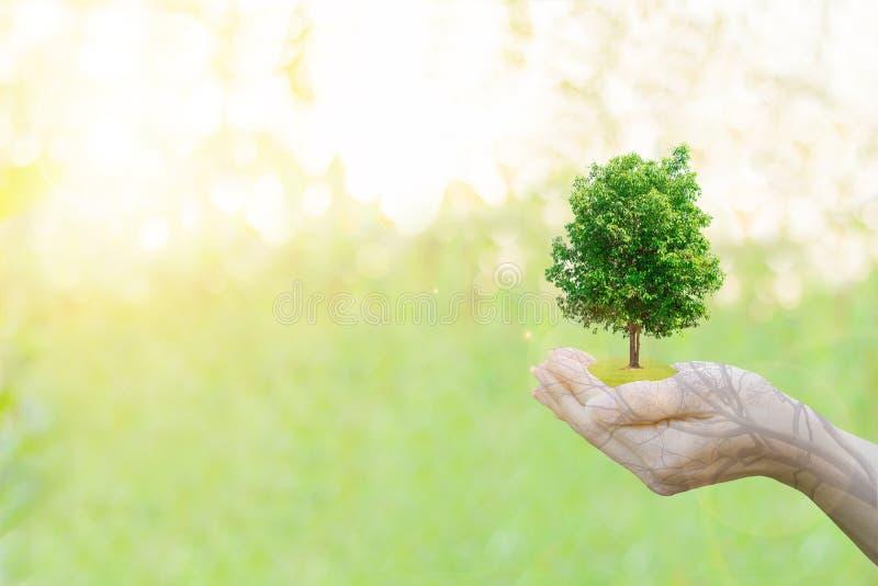 Manos humanas del concepto de la ecología de la exposición doble que sostienen el árbol grande de la planta foto de archivo