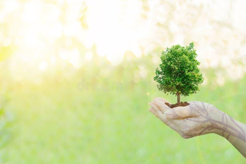 Manos humanas del concepto de la ecología de la exposición doble que sostienen el árbol grande de la planta fotografía de archivo