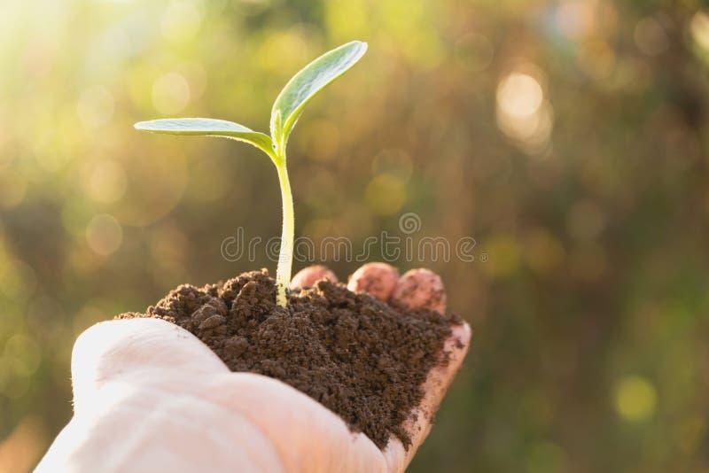 Manos humanas que llevan a cabo pequeño concepto verde de la vida vegetal Conce de la ecología imagen de archivo