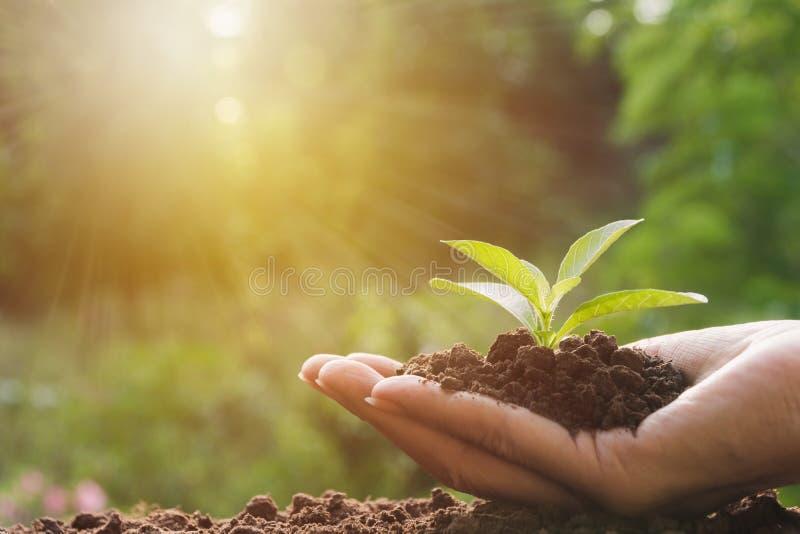 Manos humanas que llevan a cabo pequeño concepto verde de la vida vegetal Ecología concentrada fotos de archivo libres de regalías