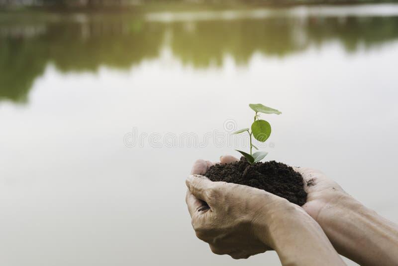 Manos humanas que llevan a cabo peque?o concepto verde de la vida vegetal Concepto de la ecolog?a fotografía de archivo libre de regalías