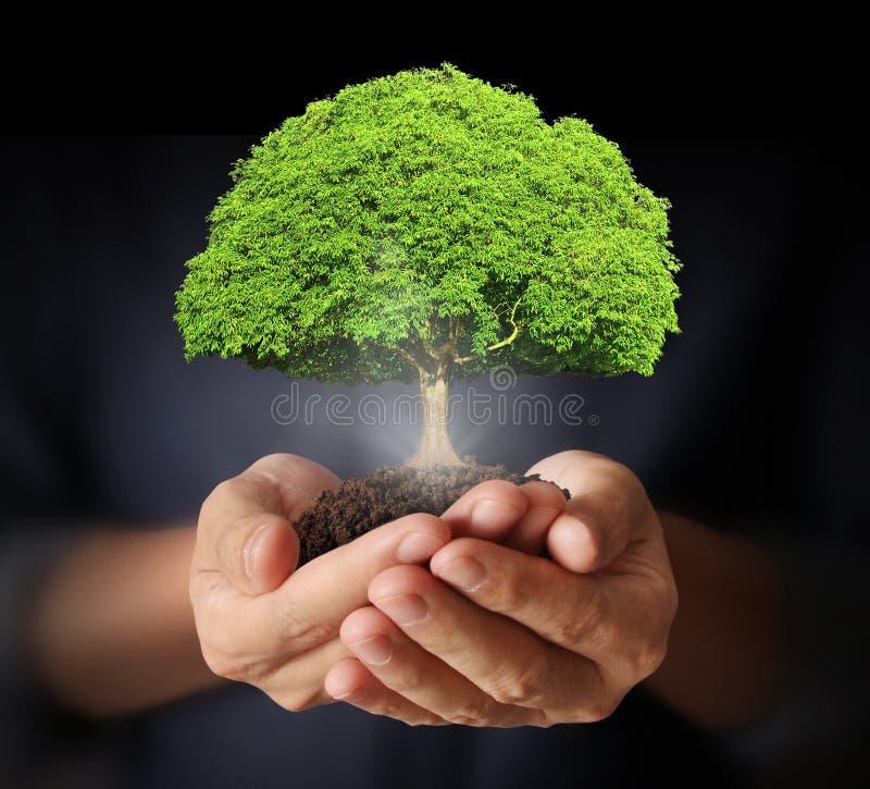 Manos humanas que sostienen el brote del árbol imagen de archivo