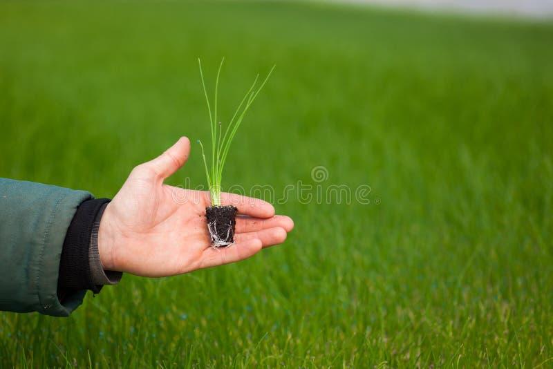 Manos humanas que sostienen la plántula con el suelo sobre fondo borroso de la naturaleza El almácigo del CSR del día del ambient imagen de archivo