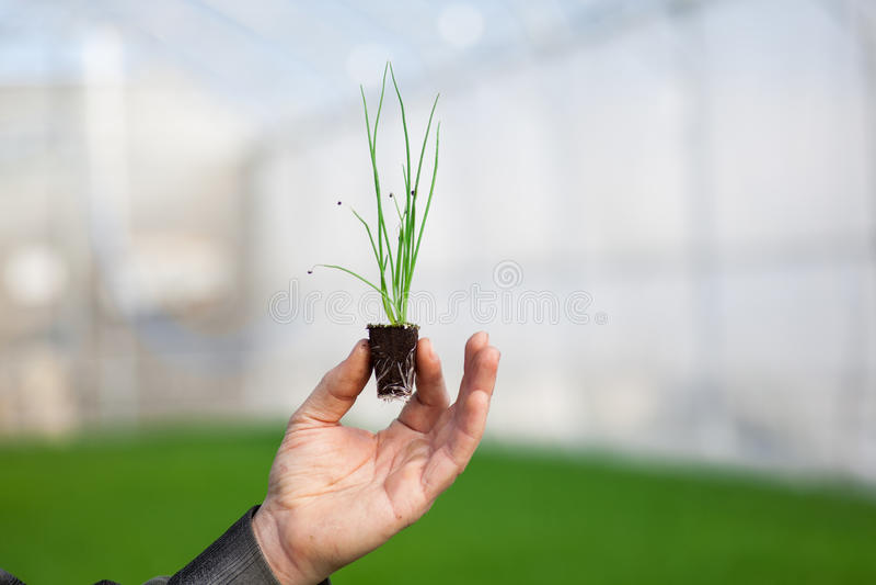 Manos humanas que sostienen la plántula con el suelo sobre fondo borroso de la naturaleza El almácigo del CSR del día del ambient imagenes de archivo