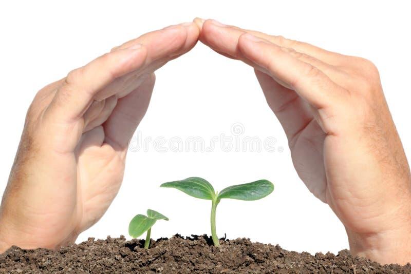 Manos protegidas pequeña planta imagen de archivo