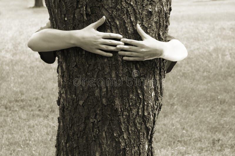 Download Manos Que Abrochan El árbol Foto de archivo - Imagen de bosque, conserve: 188172
