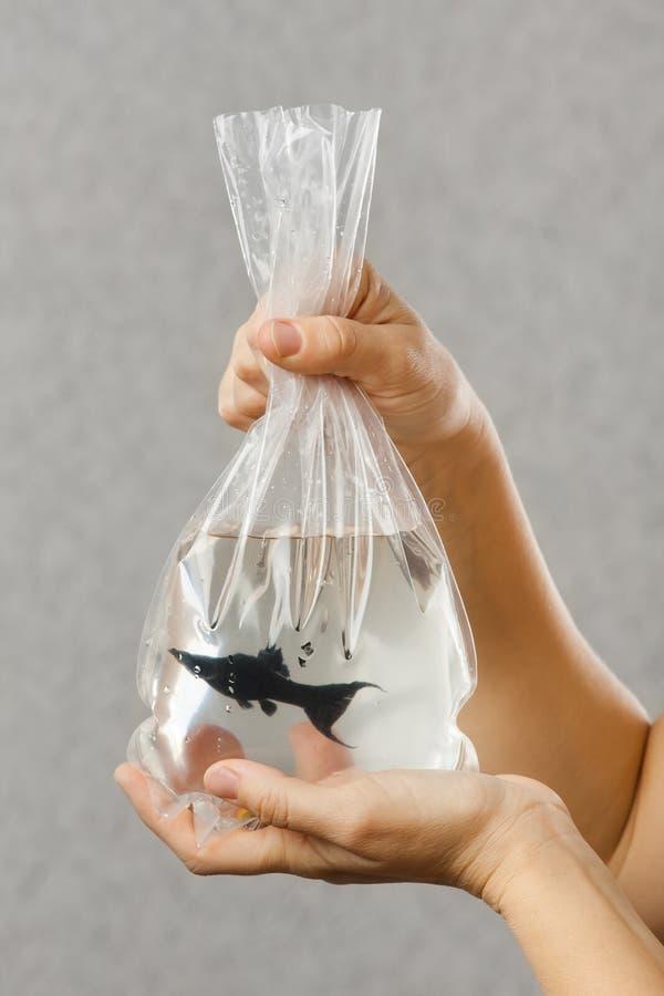 Manos que llevan a cabo el paquete con un pescado comprado del acuario imagenes de archivo
