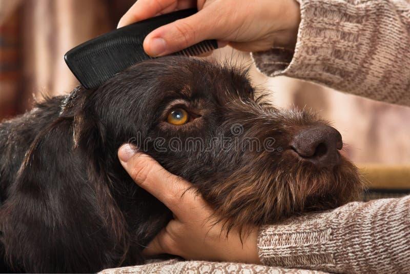 Manos que peinan la piel del perro imagenes de archivo