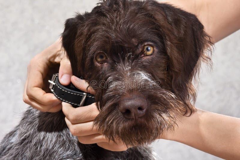Manos que ponen en el cuello en el perro, primer imagen de archivo